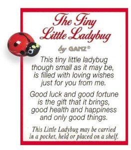 The Tiny Little Ladybug